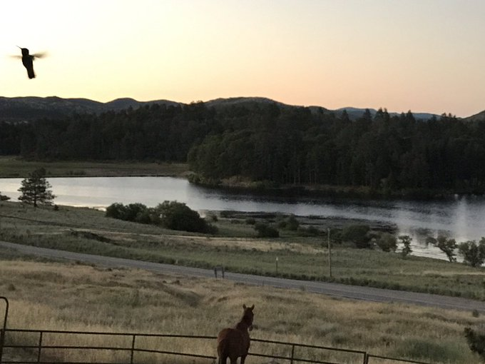Early morning with hummingbirds n horses in Julian. https://t.co/qlwINBDKBH