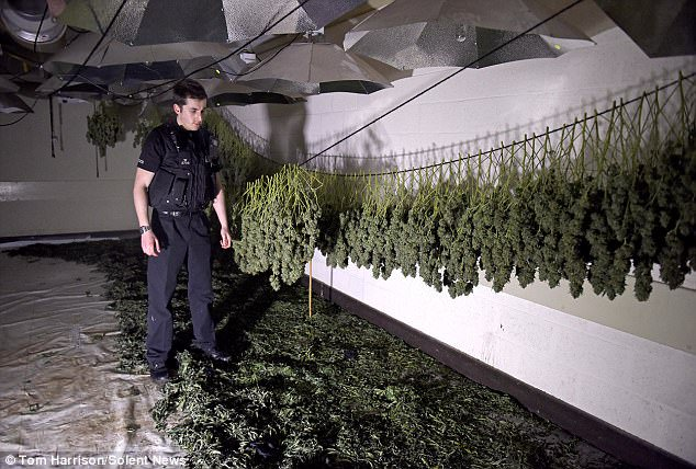 Three Brits Admit to Turning Nuclear Bunker into Huge Cannabis Factory – High Times