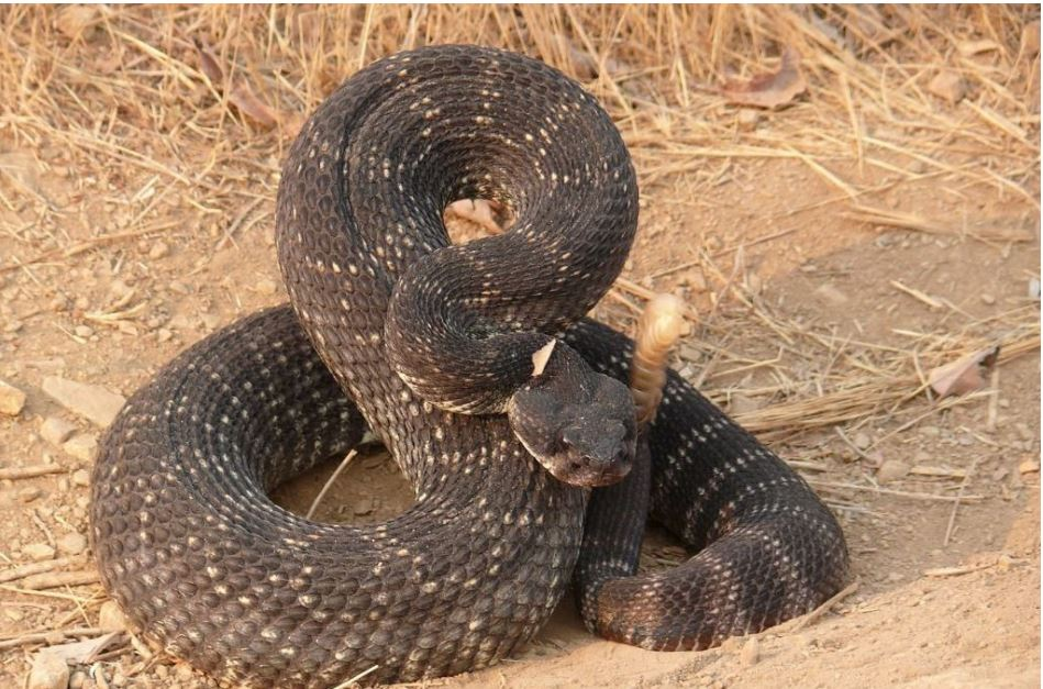 #LAHeat brings out the #snakes @LAFDvalley already transported one rattlesnake bit victim today Pls be cautious Tips  http:// bit.ly/2smCmRY  &nbsp;  <br>http://pic.twitter.com/LDFgJM5Bhy