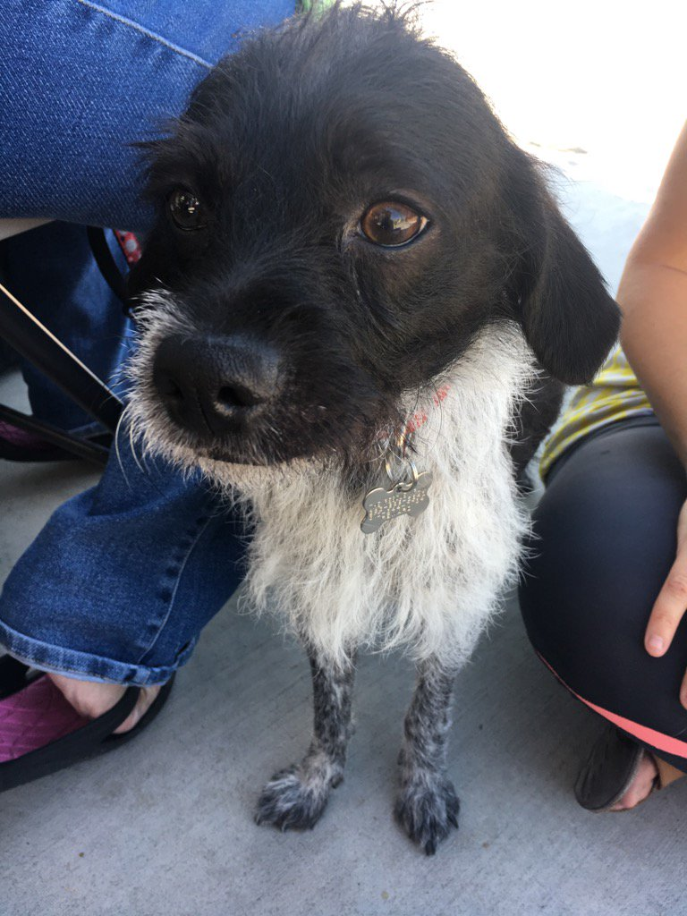 Plz network #Billy. He&#39;s a year old with a perfect turnout &amp; sweet underbite. #MohawkIncluded @therescuetrain plz RT <br>http://pic.twitter.com/N7uockf0y3