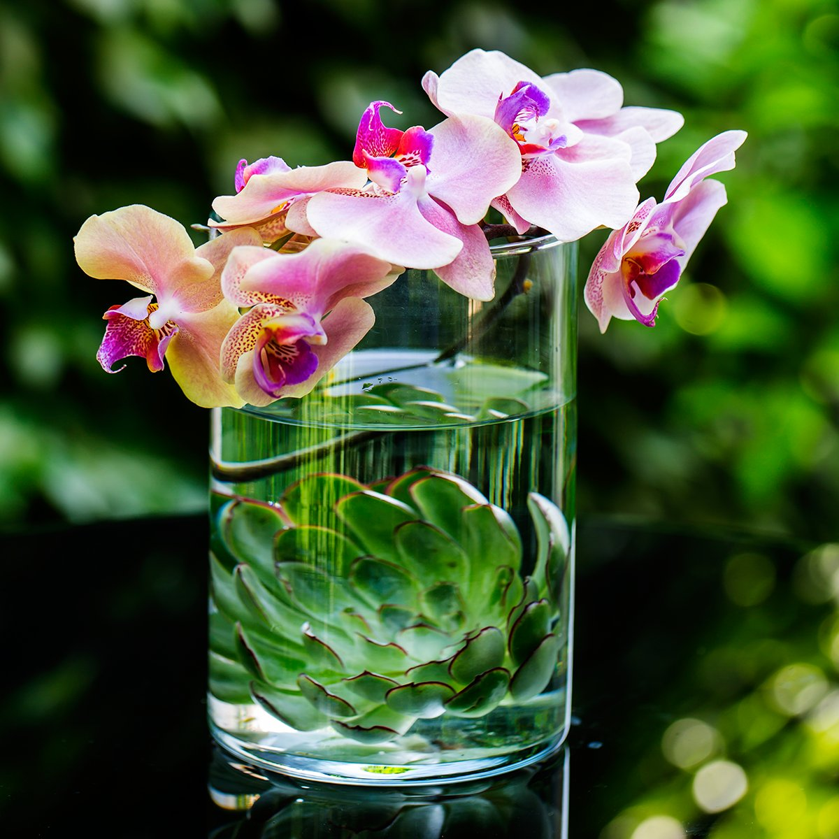 The orchid is Mother Nature's masterpiece. #Phalaenopsis #Dubai #Amman https://t.co/r4m9ILFZJS