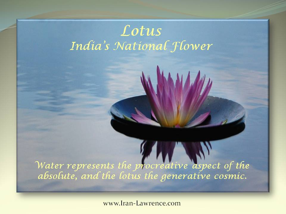 Water represents the procreative aspect of the absolute, and the lotus the generative cosmic. #Lotus #Cosmic <br>http://pic.twitter.com/ceQKAwuie7