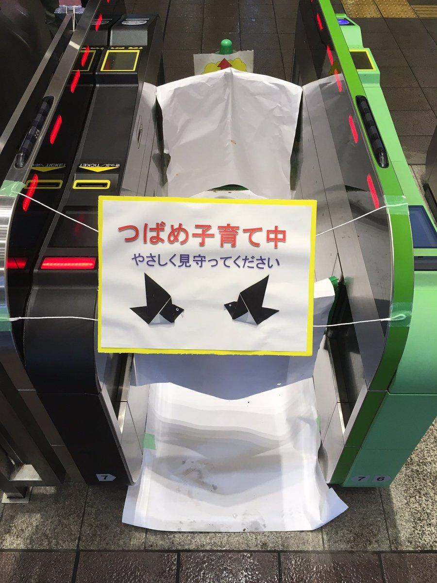 つばめが改札機を閉鎖してもらって子育てをする駅、鎌倉駅