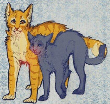 Коты воители огнезвезд фото - c22