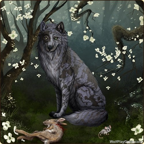 wolfplaygame on twitter my new wolf amara isnt she pretty