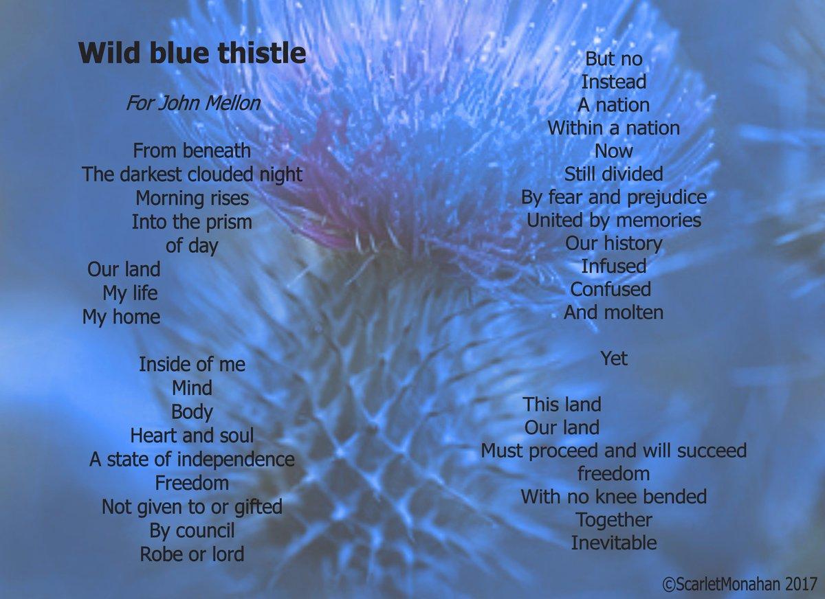 Wild Blue Thistle.  #poetry #art #music #spokenword #poetrycypher 33