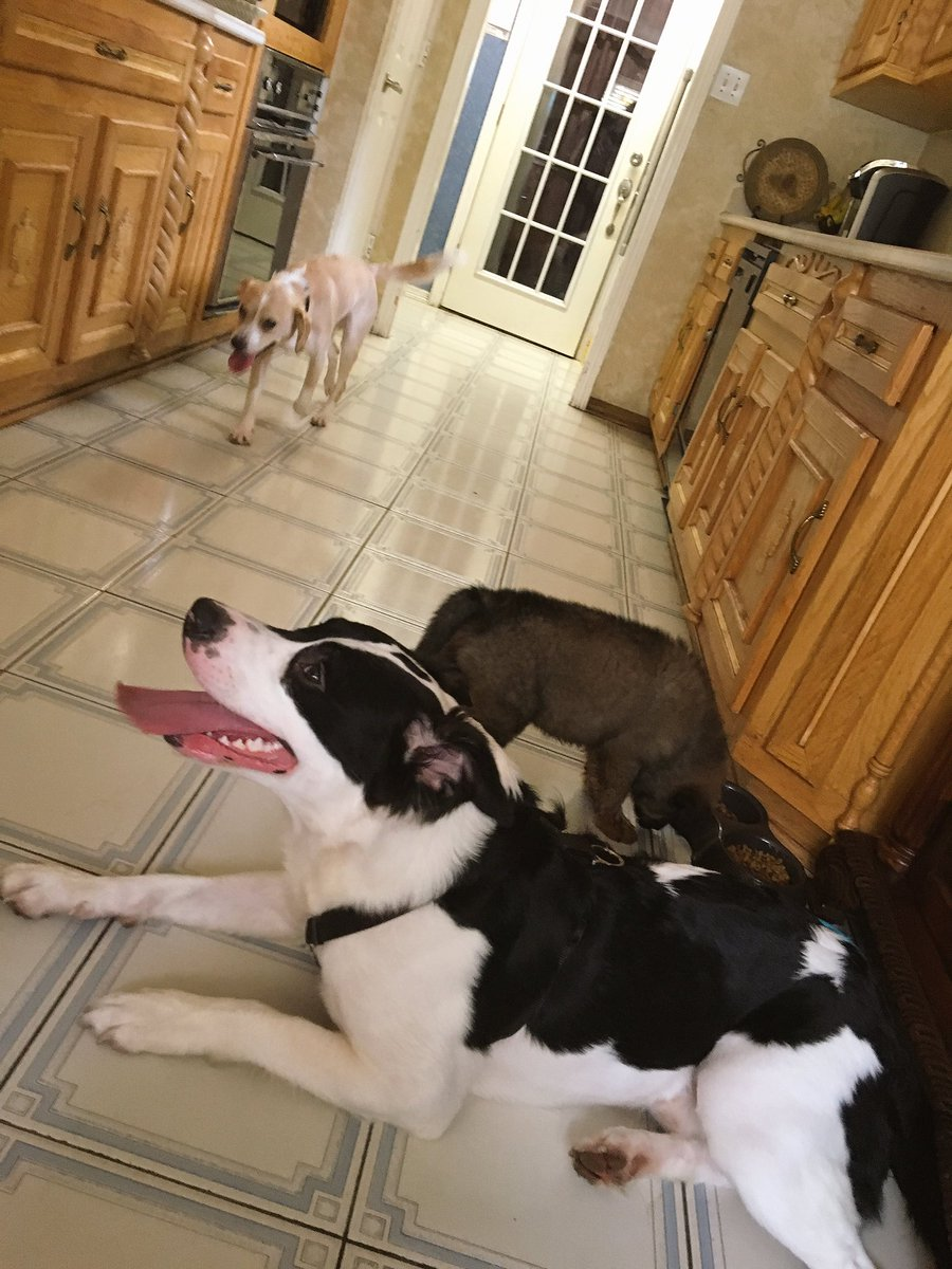 """odalis on twitter: """"my brother in law and sister get a dog every"""