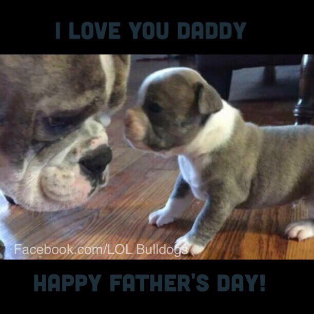 Happy Father&#39;s Day from LOL Bulldogs. #bulldog #dsk #englishbulldog #lol<br>http://pic.twitter.com/95jiEmdxPo