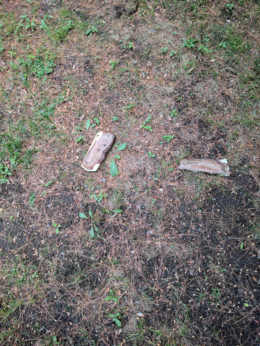 Mike Martin On Twitter Crazy Neighbor Has Now Tossed An Entire Sandwich My Lawn Pics Are Taken Filing Proper Complaint