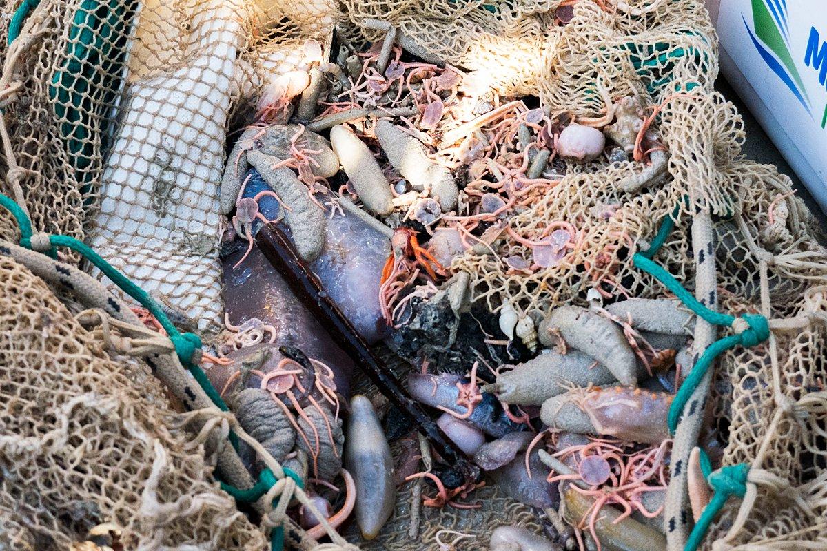 【豪州】国際研究チームが調査航海で奇妙な新種深海生物大量発見 theguardian.com/environment/20…  調査船インベスティゲーター号で豪州の大陸プレートの東端を1ヶ月かけて探索。採集された1000種以上の海洋生物のうち約3分の1が新種