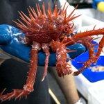 【豪州】国際研究チームが調査航海で奇妙な新種深海生物大量発見theguardian.com/envi…