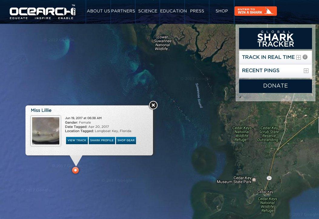 6ft bull shark Miss Lillie pings off Cedar Key, #FL!