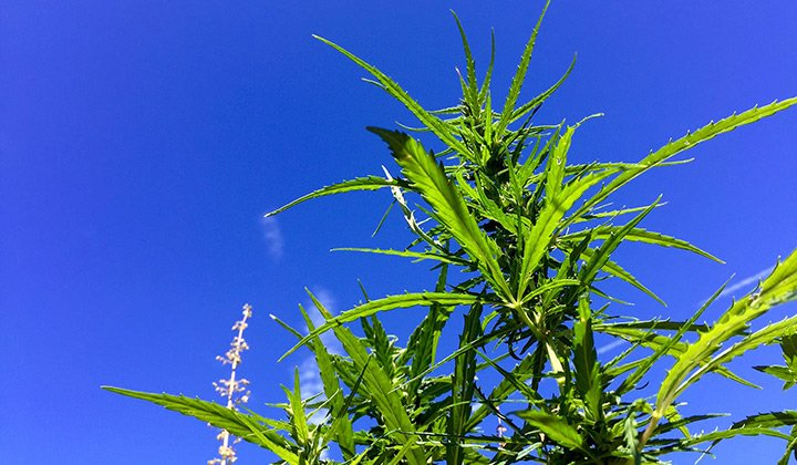 The 10 Most Common Misconceptions About Hemp
