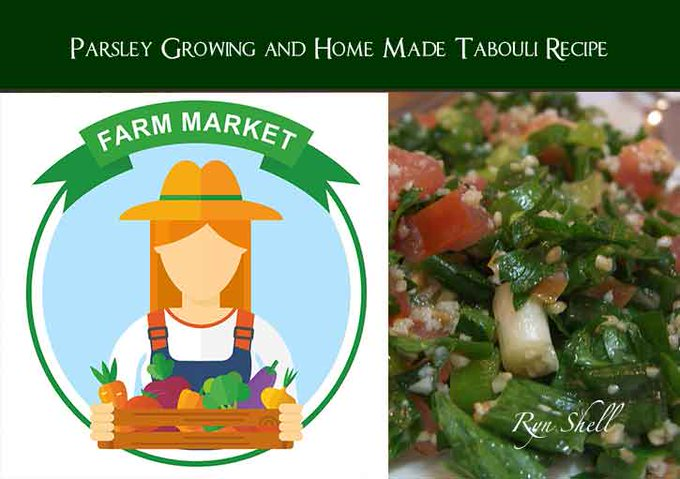 Parsley Growing and Home Made Tabouli Recipe.