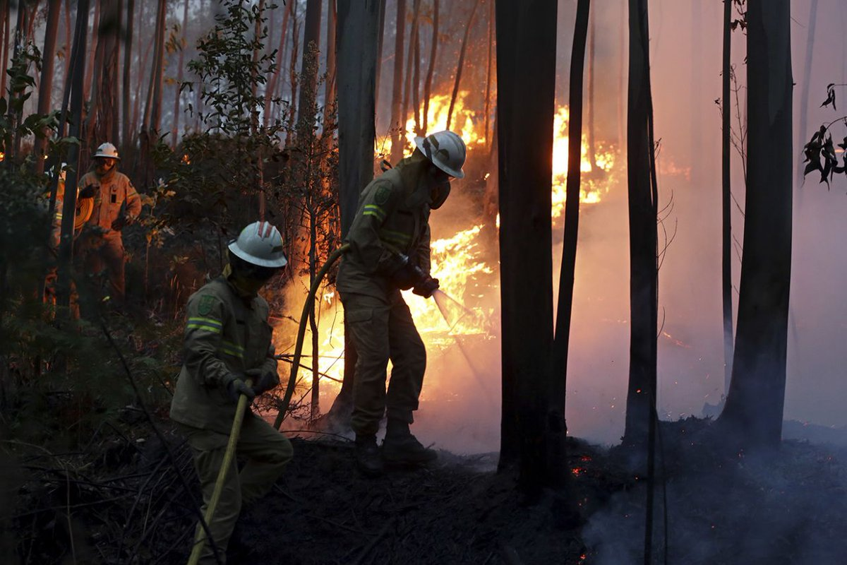 Massive forest fire kills 62 in Portugal; search on for more bodies. #WakeUpWith10  http:// news10.com/2017/06/19/mas sive-forest-fire-kills-62-in-portugal-search-on-for-more-bodies/?cid=twitter_WTEN &nbsp; … <br>http://pic.twitter.com/xz3e0vbkQQ
