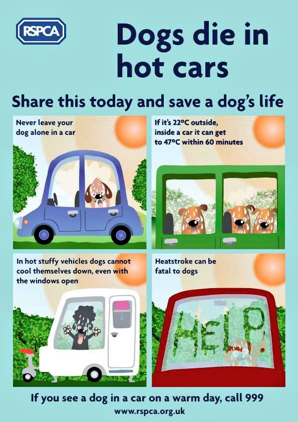 Worth reminding everyone, given how warm the weather is today🌞🐶  #heat...