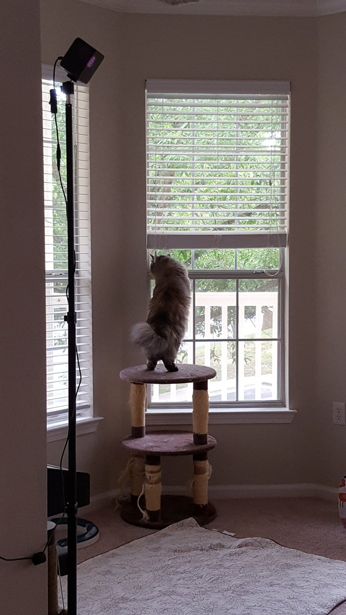 Oh, there's some birbs out there alright. #sakicat #cats #cuteanimals...