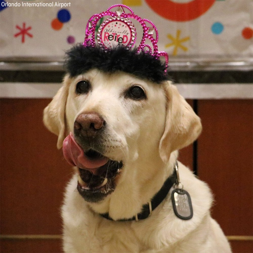 After 5 years of service at Orlando airport, Gema the K-9 was honored with a retirement party! #HappyRetirementGema https://t.co/MqQbpmwRgV