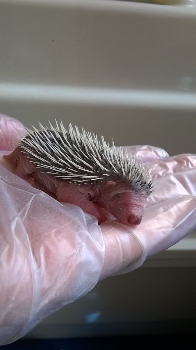 test Twitter Media - Hmmm something tells me it's baby season! #wildlife #hedgehogs #volunteers https://t.co/UYJ5BmYDC0