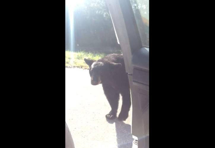 Video: Wandering bear pays visit to Florida deputy