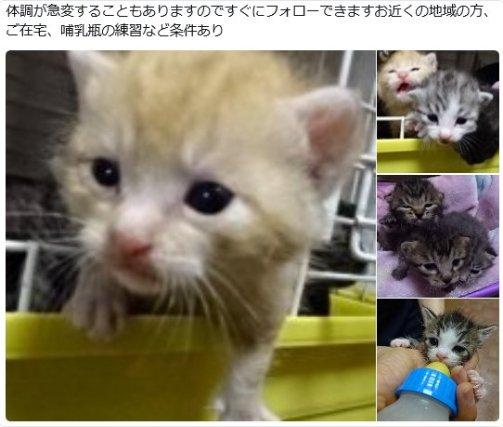 皆様ご協力を☆ #メレンゲの気持ち #日テレ  RT@tomoneko488:【犬猫救済の輪さん】 https://t.co/6VRANFnLsT 沢山の乳飲み子がセンターに収容されてきます。  #ミルク猫 の #里親 さん大募集。 https://t.co/Dd2oiB7HeV