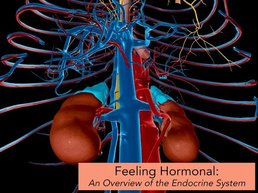 Feeling #hormonal? Learn more about the #endocrine system&#39;s structure and function in our latest blog post!   http:// ow.ly/qER130cI11t  &nbsp;  <br>http://pic.twitter.com/40p8cxcNdf