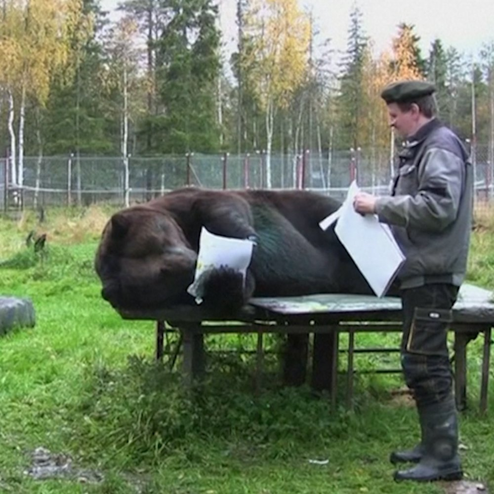 This 900 lb bear can paint better than some humans
