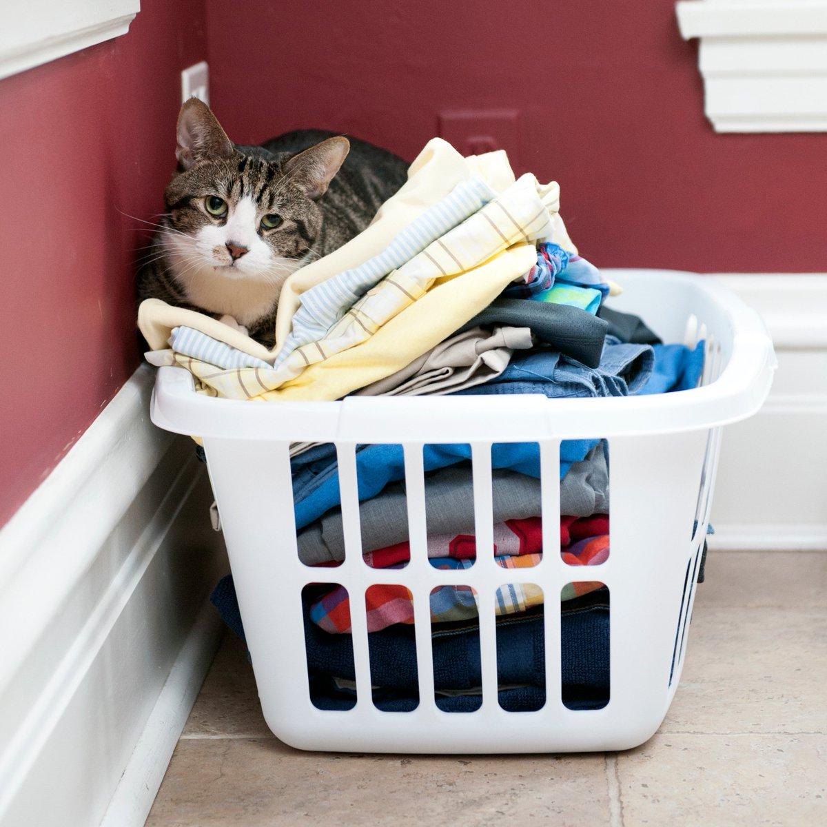 #mondaymotivation do laundry. fold laundry. nap in laundry. https://t....