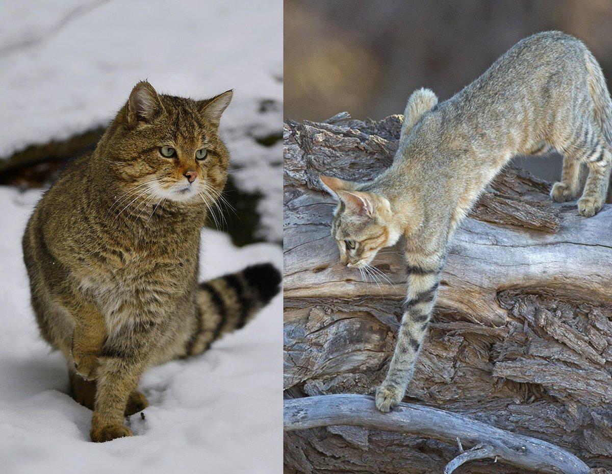 Comment le chat a conquis le monde #CNRSleJournal  http:// bit.ly/2sstiLD  &nbsp;  <br>http://pic.twitter.com/s1HImyYxTN
