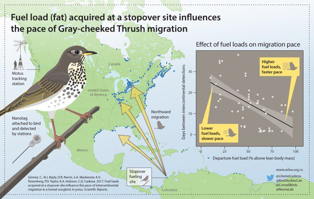 Automated tracking confirms importance of stop-over sites for onward journey of migrating birds  https://www. nature.com/articles/s4159 8-017-03503-4 &nbsp; …  #ornithology <br>http://pic.twitter.com/xcotWJFbQ5