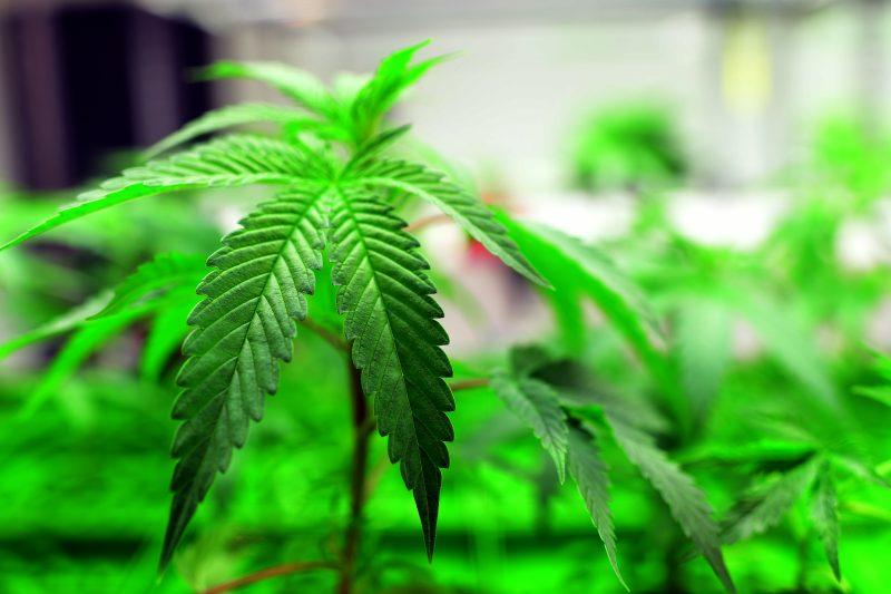 Arkansas just opened door to get into state's brand-new marijuana industry
