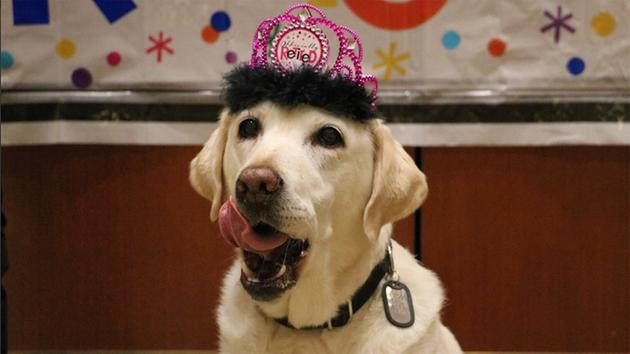 After five years of service at Orlando International Airport, Gema the K-9 was honored with a retirement party: https://t.co/i1U2gRswsb