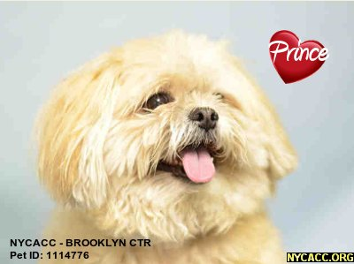 Good #Dogs Deserve Good Homes In #NewYorkCity Prince Is A Good Dog Can&#39;t U Tell? Give&#39;m A Good Home #NYC #Adopt At #NYCACC #Brooklyn #Pets<br>http://pic.twitter.com/BKfEizW3ZN