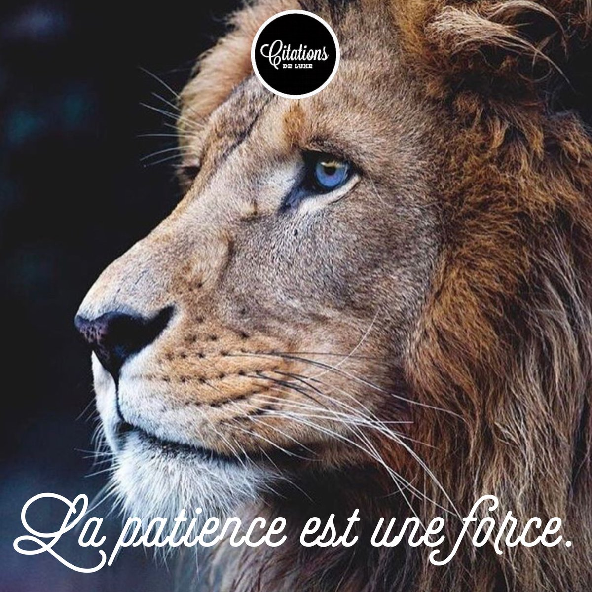 Citations De Luxe On Twitter La Patience Est Une Force