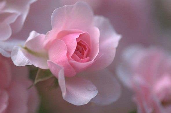 sri gawn tu fahr on love is a flower displaying her