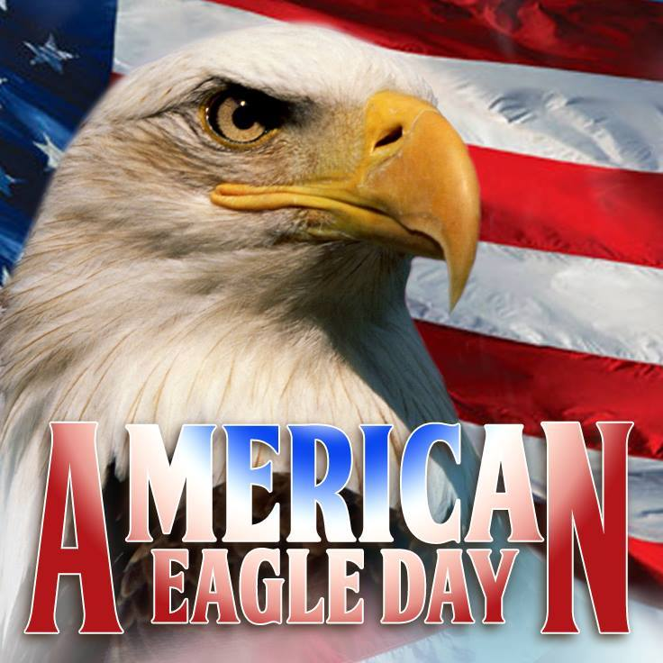 It's National American Eagle Day 🦅🇺🇸 - honoring our country's national bird and symbol of freedom!