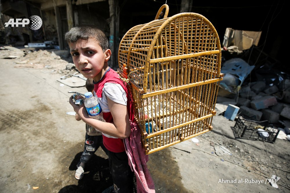 An Iraqi boy carries a birdcage on his back as he flees from the Old City of Mosul during  #MosulOffensive  Ahmad Al Rubaye #AFP <br>http://pic.twitter.com/Qx2NF5dkAo