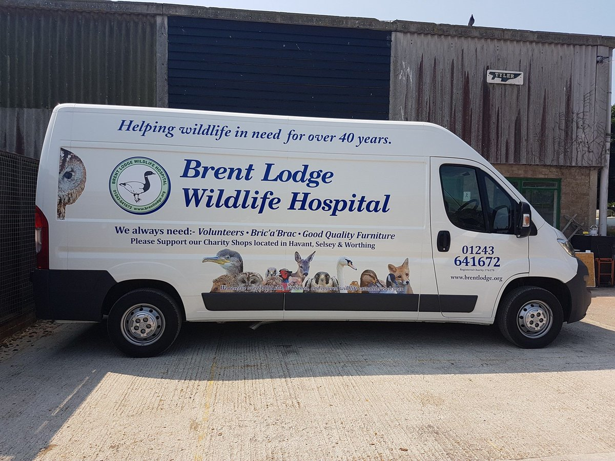 test Twitter Media - A huge thank you to everyone at The Sign Shop in Chichester for the  amazing job they have done on our new van. It looks great!!! 🦉🦆🦊🐿️🕊️🐞🐁😄 https://t.co/0Yt1g6FYSc