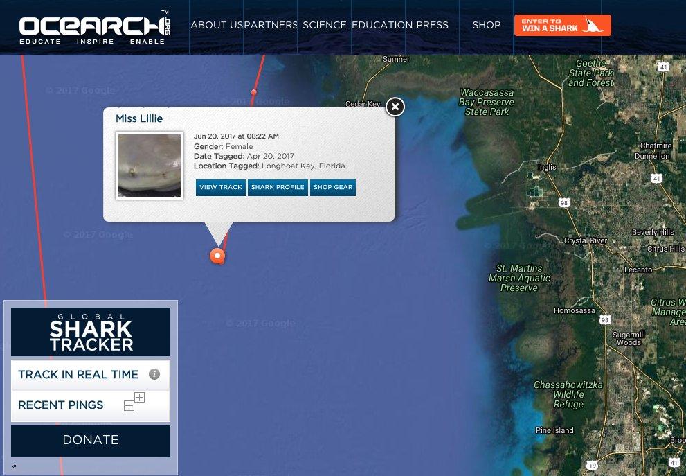 6ft bull shark Miss Lillie continues to ping off Cedar Key, FL!