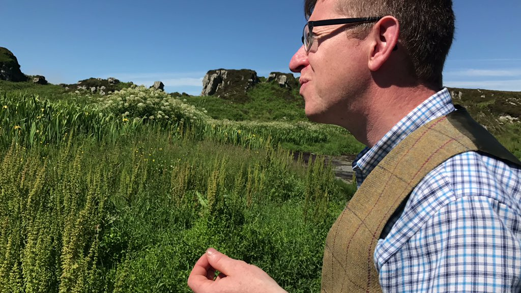 Talking chickweed and orache w