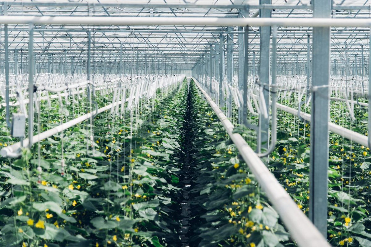 Taking that #CO2 and giving it to the #greenhouse  https:// snapm.uk/2sZkaxE  &nbsp;   @Climeworks #Startup #CarbonCapture #NegativeEmissions<br>http://pic.twitter.com/2W4A1alcG3