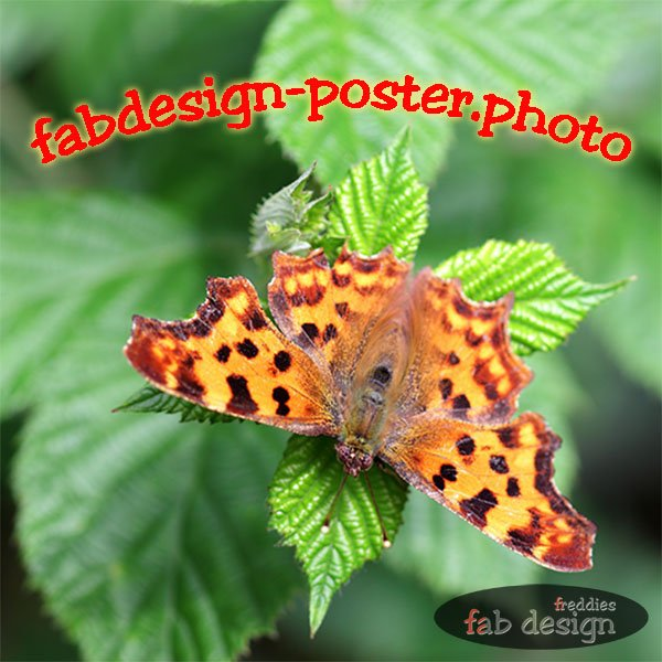 freddies fab design fotografie
