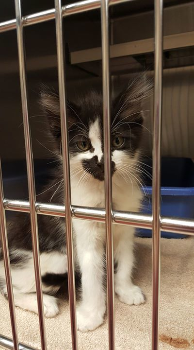 Single kitten needs our help. Cage 676 https://t.co/5DkeUAUPvi https:/...