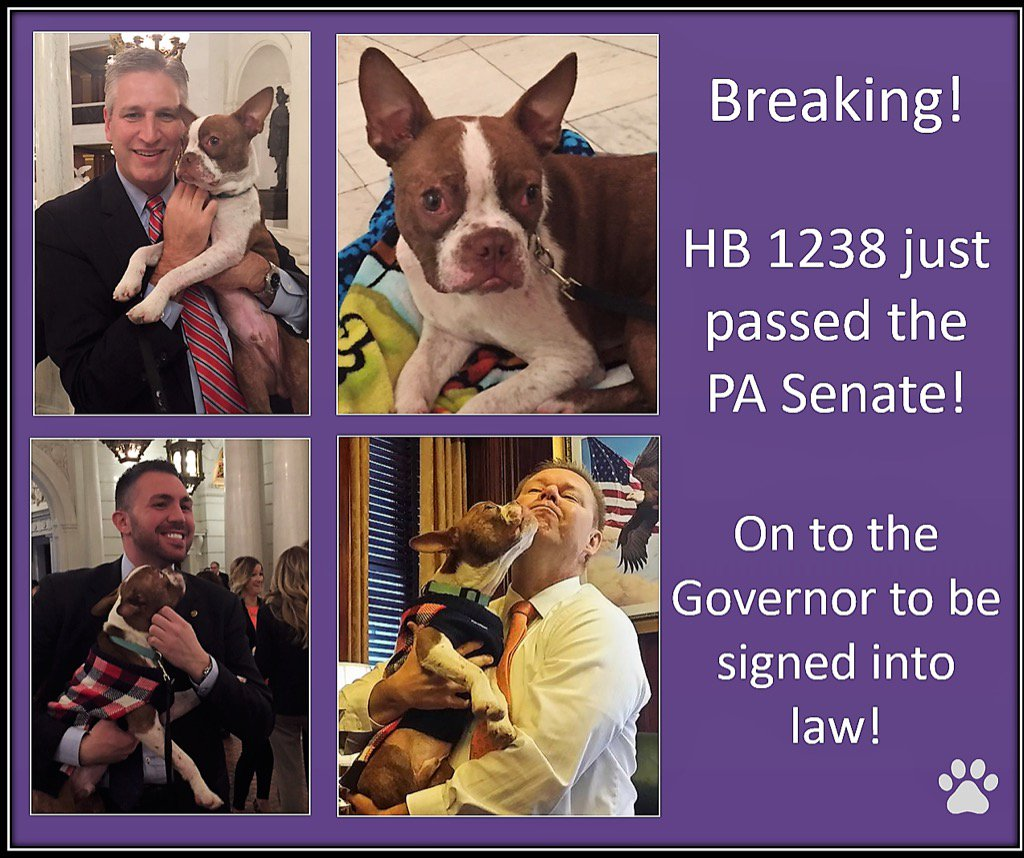HB 1238 heads to @GovernorTomWolf after passing #PASenate!  TY #PA animal lovers for all your hard work! #Libre <br>http://pic.twitter.com/I6MISbIbP7
