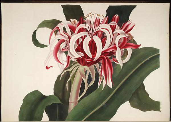 Priscilla Susan Bury used #SciArt to capture the beauty of the hexandrian plants in her 1830s folio  http:// s.si.edu/2rwFbyB  &nbsp;   #WomenMW<br>http://pic.twitter.com/fSkr2Tlfn6