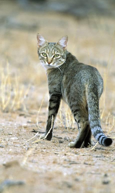 Pesquisa mostra que primeiro gato chegou na Europa ainda na Idade da Pedra https://t.co/gO5QBGa5Yk