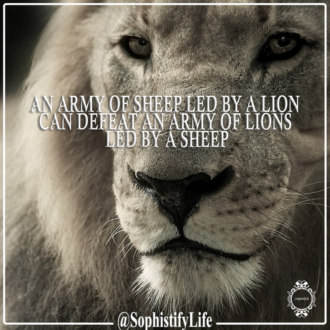 Inspirational Quotes On Twitter An Army Of Sheep Led By A Lion Can