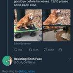 This is Koko cute stories