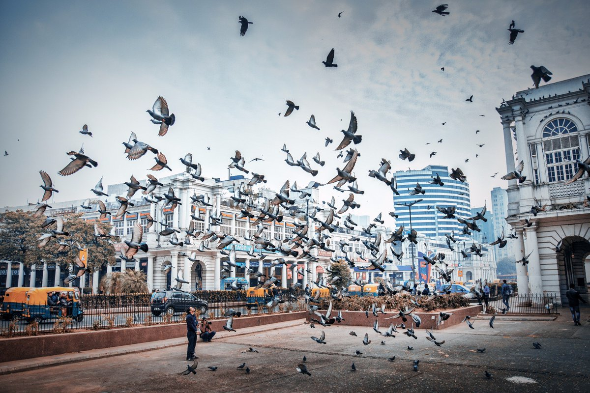 """LeMeridien NewDelhi on Twitter: """"The New Delhi is said to be the world's  second most bird-rich capital city, after Kenya's Nairobi.  #DestinationUnlocked… https://t.co/5Ox2QW0Vsi"""""""
