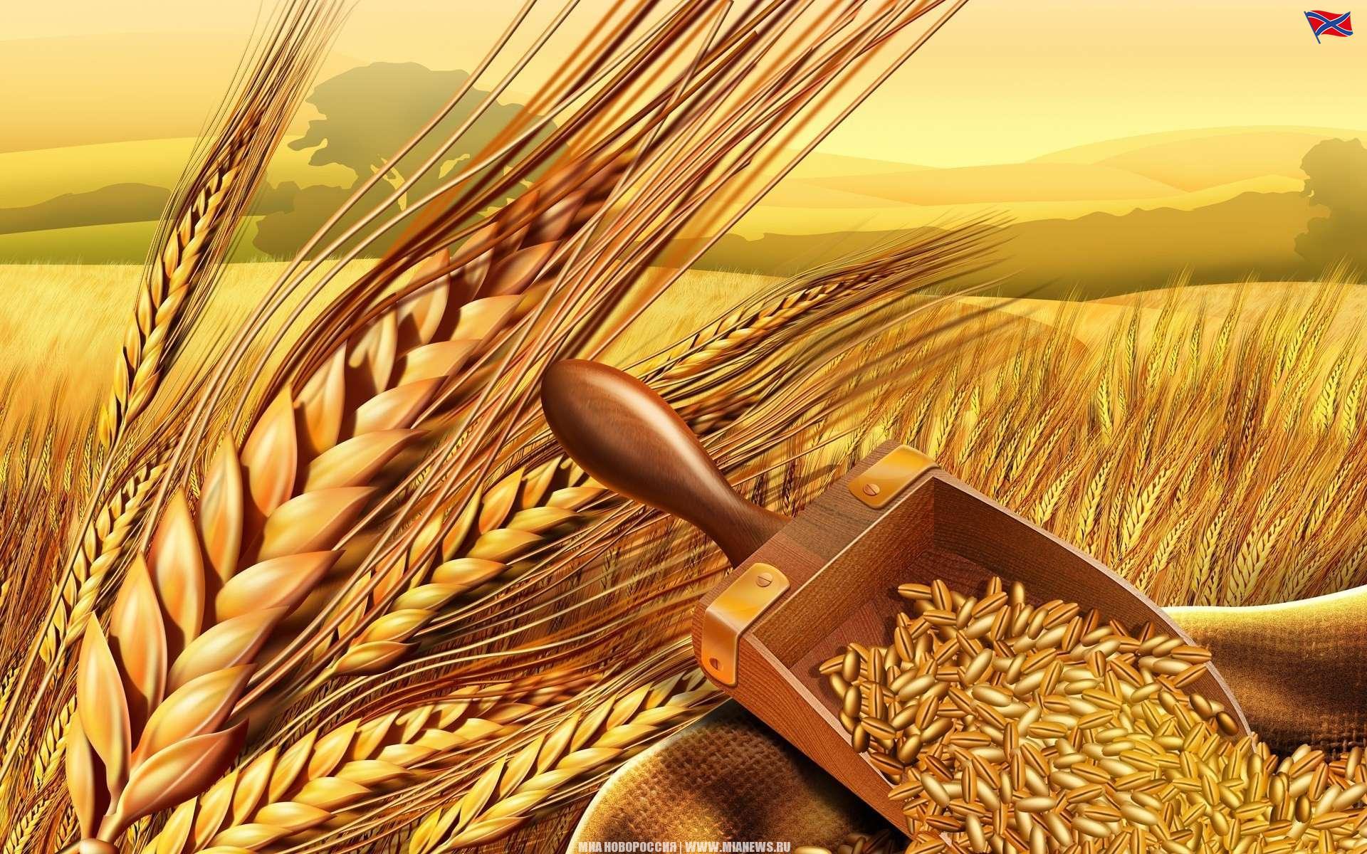 Скучашки прикольные, картинки о хлебе и хлеборобах